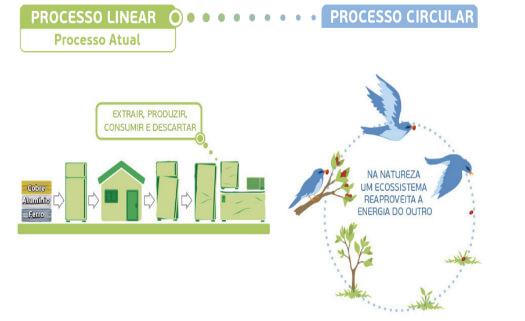 processo linear e circular