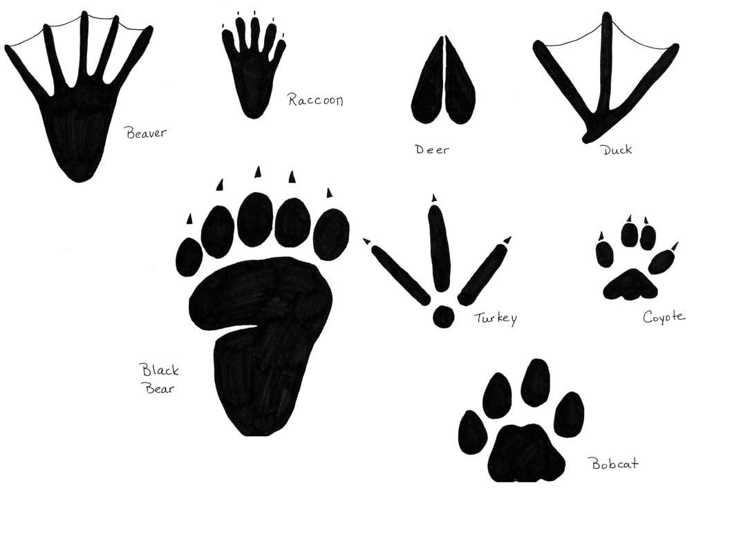 Inspect Animal Tracks