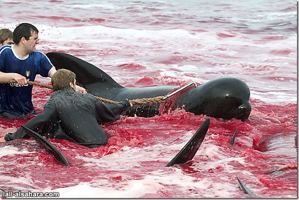 Picture 7: The sea is stained in red and in the mean while it's not because of the climate effects of nature.