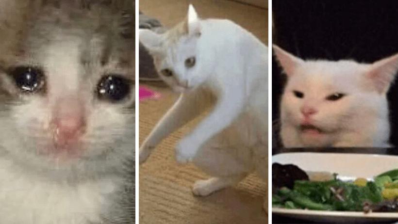 Los 14 Mejores Memes Del Pobre Gato Reganado Que Estan Circulando
