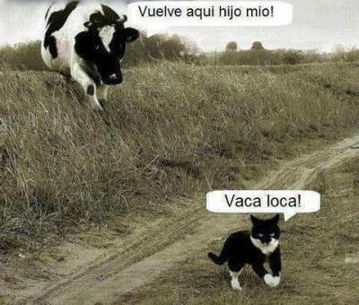 Para Compartilhar Meme Engracado Otariano Humor 17 Imagens