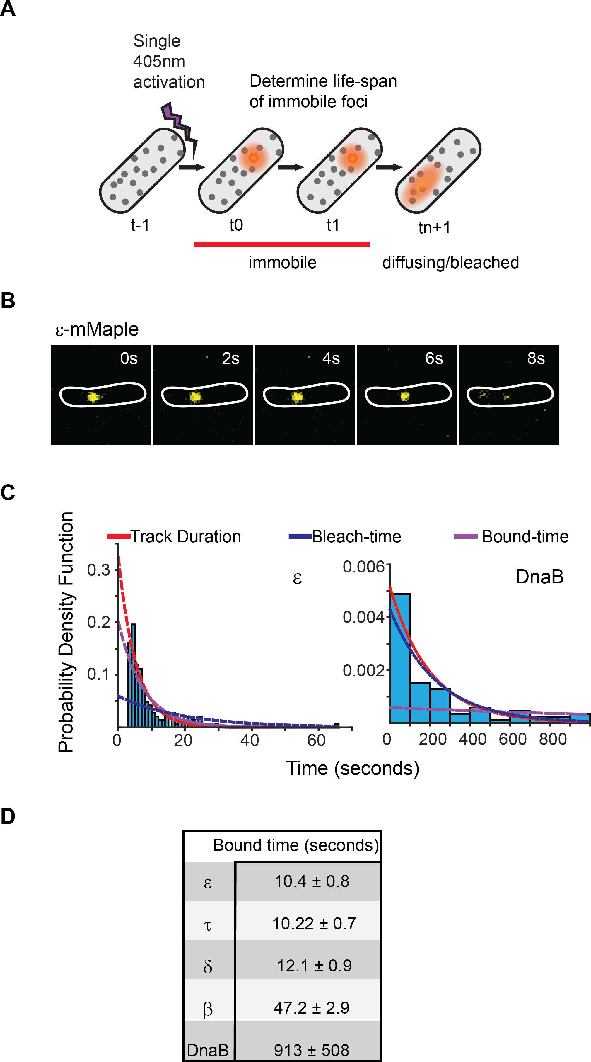 Frequent Exchange Of The Dna Polymerase During Bacterial Chromosome Replication