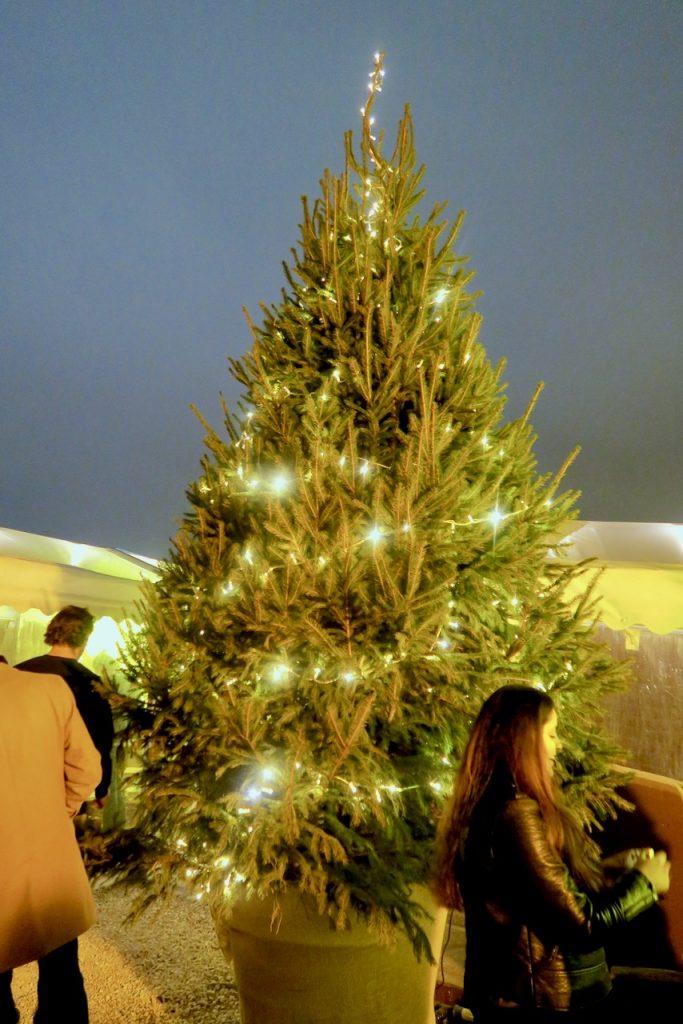 Pergola Pine Tree