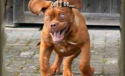 Funny Dog Cat Pictures Funny Stories About Dogs Funny Smiling Dogs Funny Dog