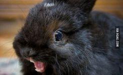 Bunny Meme Derp Face For Carrots