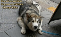 Funny Animal Pictures With Quotes About Life The Picture Of The Funny Dog In The