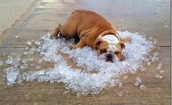 Dog Funny Dog Laying On Ice