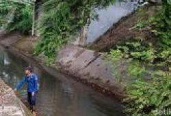 Perburuan Sanca yang Tewaskan ABG di Serpong Belum Usai