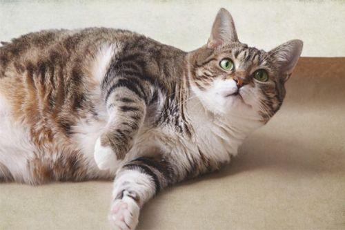 Mèo mướp: Đặc điểm, tập tính, cách nuôi và huấn luyện - 1
