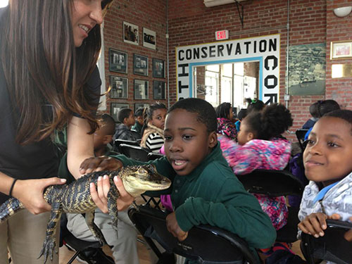 Earth Conservation Corps - Alligator
