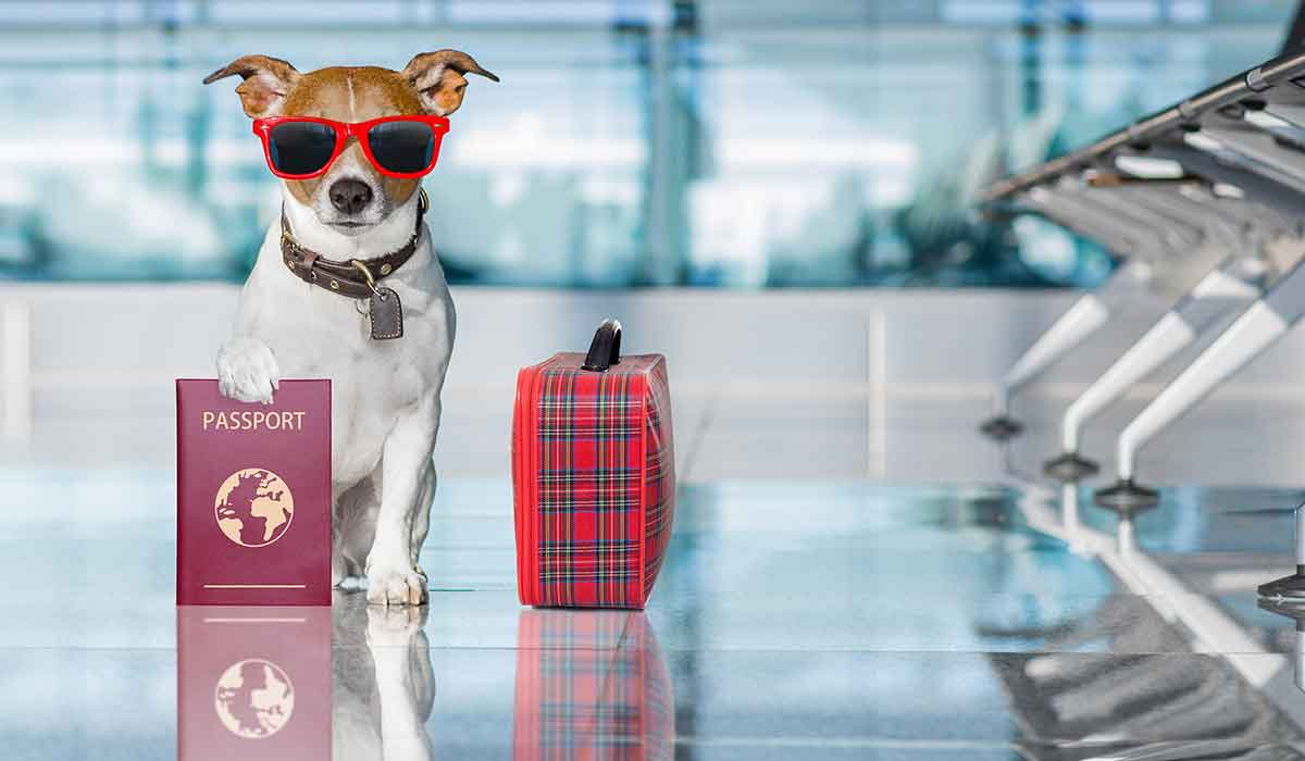Pets May Need Passport Crossing Border To Northern Ireland
