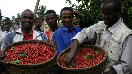 Sidama Coffee Farmers' Cooperative Union