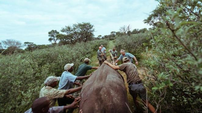 The rhinos were introduced to Akagera National Park under the supervision of a team of an expertly-trained rhino tracking and protection team/The New Times
