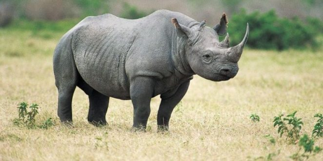 The Black Rhino/Uganda Travel Blog