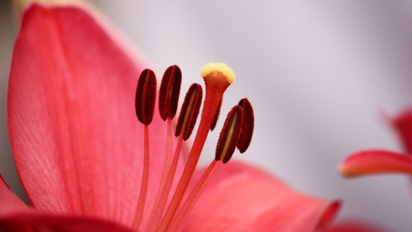 Close Up of a Flower by Vineet Tuli -- CC-BY-SA 3.0