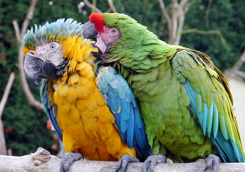 Почему они у вас не разговаривают? гифки, животные, история, попугай ара, факты