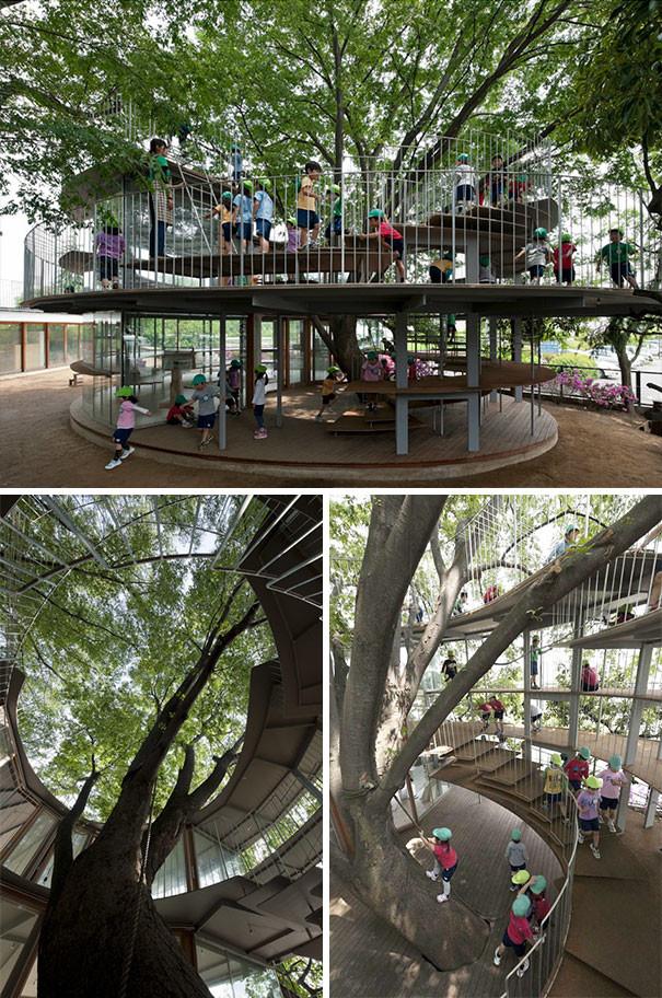 Детский сад, построенный вокруг дерева, Япония гениально, изобретения, подборка, студенты, школа