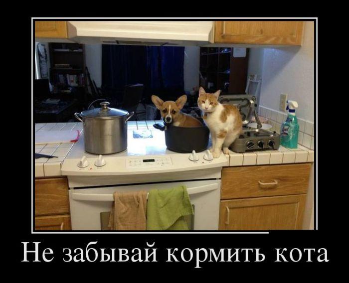Не забывай кормить кота демотиватор, демотиваторы, жизненно, картинки, подборка, прикол, смех, юмор