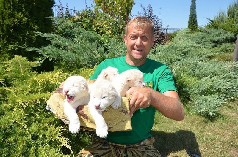 В Крыму родились львята: Царь, Режиссер, Няша и Матильда Матильда, животные, крым, львята, милота, няшка