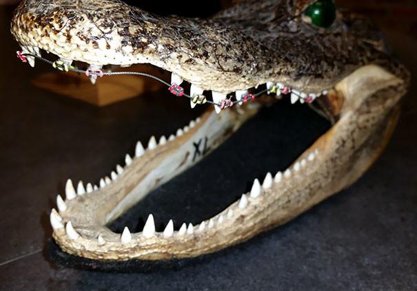 """""""У моего стоматолога в кабинете есть особенная голова крокодила.."""" врачи, дантисты, забавно, зубной врач, приколы, стоматологи, фото, юмор"""