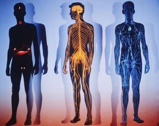 40 самых интересных фактов о человеке биология, факты, человек