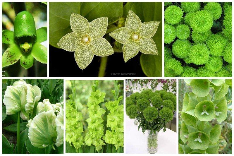 Цветы - как листья, листья - как цветы Зеленое, интересное, необычное, природа, флора, цветы