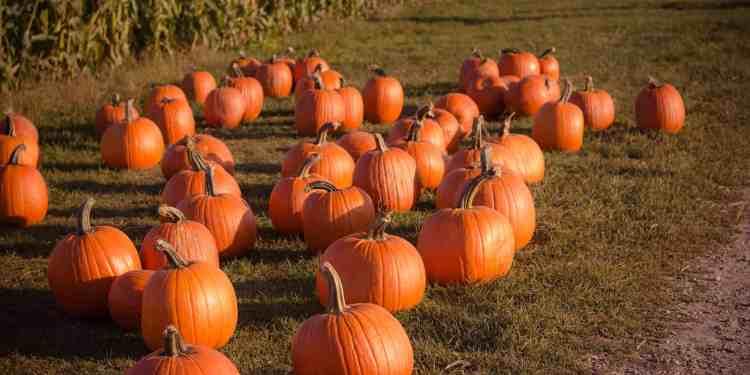 10 Fall-tastic Date Ideas