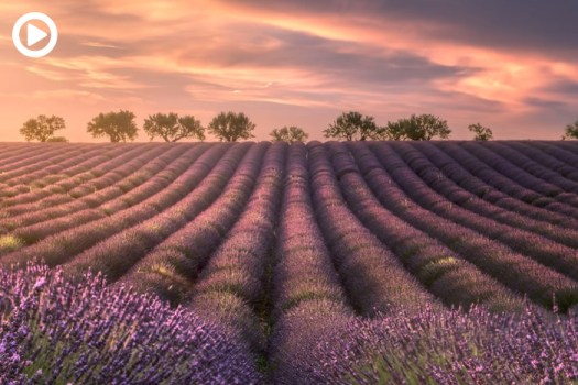 Tips on Shooting the Lavender Fields of Provence