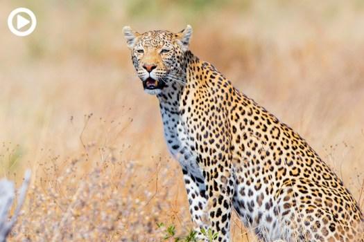 An Original Flow Motion Safari Video Featuring African Wildlife