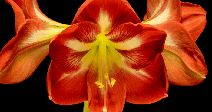 Over 24,000 Photos Were Compiled in Time-lapse Showing 929 Hours of Flowers Blooming