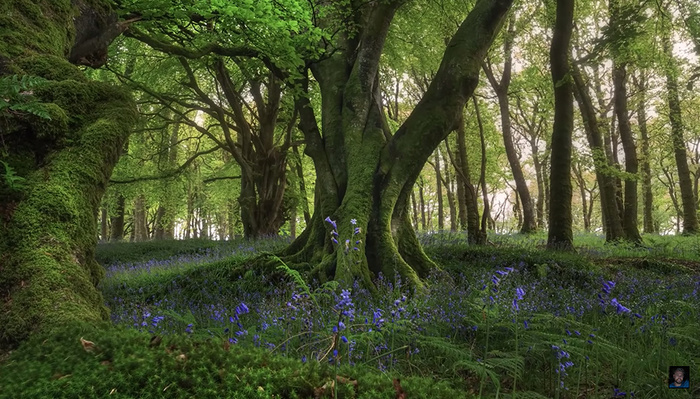 How to Create Stunning Images of Trees
