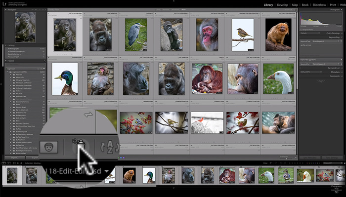 The Usefulness of the Painter Tool in Lightroom