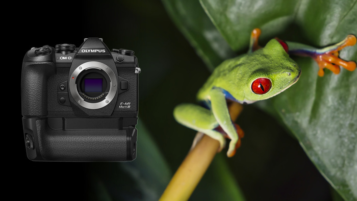 The Ultimate Lightweight Wildlife Camera? Fstoppers Reviews Olympus OM-D E-M1 Mark III