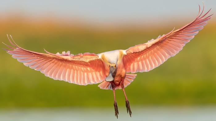 Mark Smith's Beautiful Bird in Flight Photography