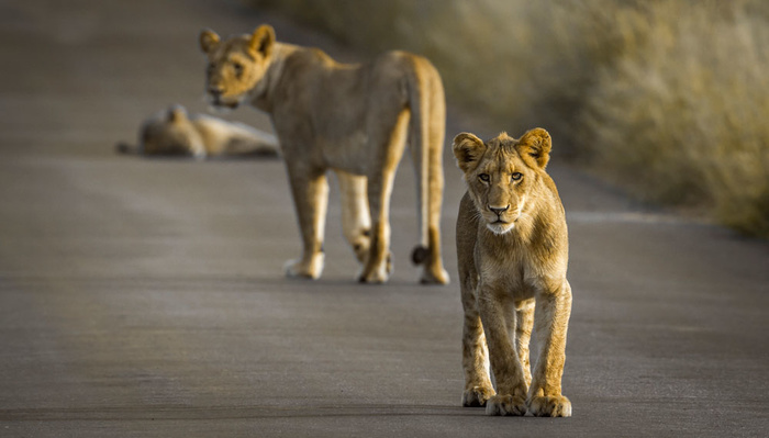 Inspiring Videos of Wild Animals Reclaiming The Empty Streets