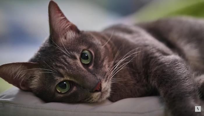 5 Tips to Improve Your Pet Photos