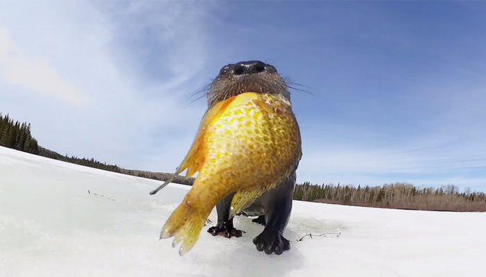 When Adorable Animals Find the Spy Camera