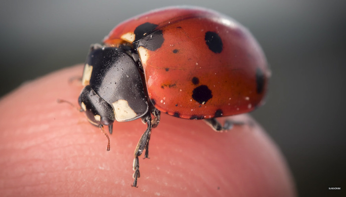 10 Camera and Flash Settings You Should Know for Macro Photography