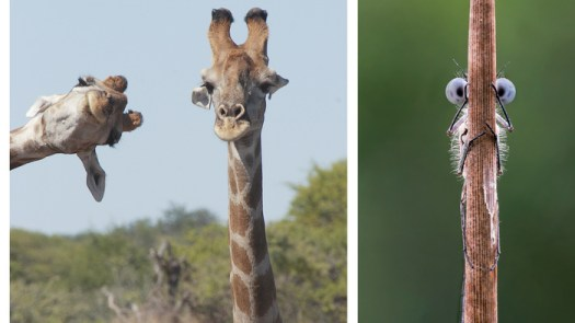 Comedy Wildlife Photography Awards 2020 Finalists Announced: These Are Hilarious!