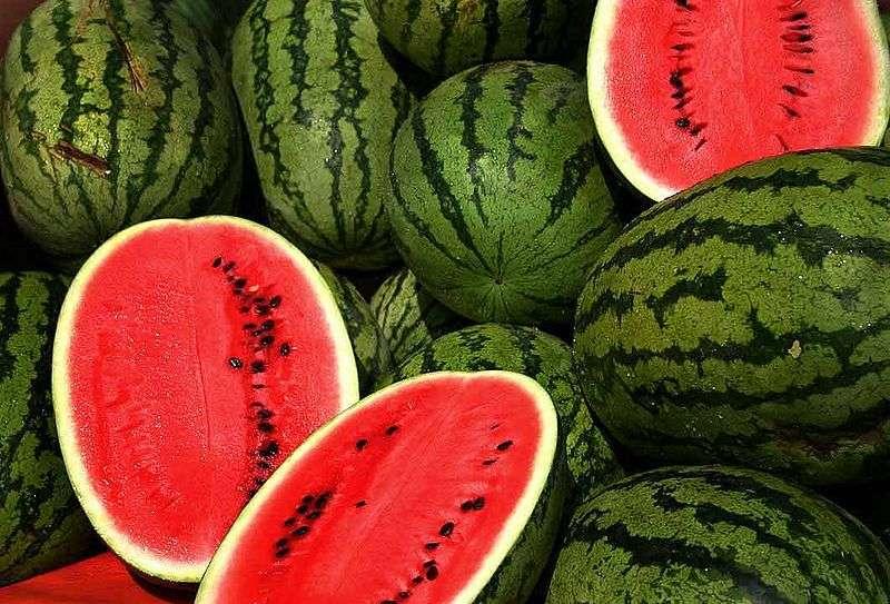 Définition | Pastèque - Melon d'eau | Futura Planète