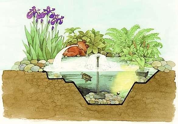 eau de bassin limpide et pure