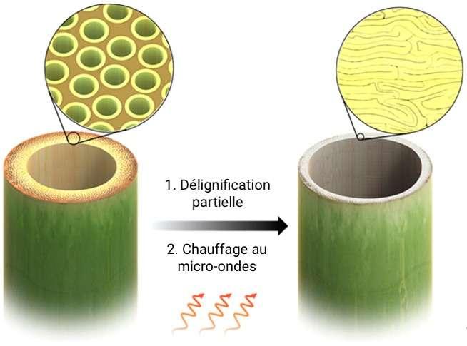 L'élimination partielle de la lignine suivie d'un séchage au micro-ondes modifie la structure du bois, le rendant plus rigide et plus résistant à la compression et à l'étirement. © ACS Nano, 2020 (adaptation C.D pour Futura)