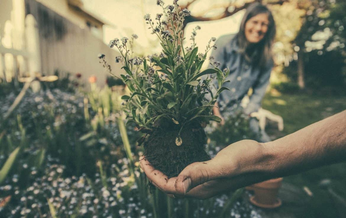 12 Reasons Why Gardening Is Good For You Blog Garden Buildings