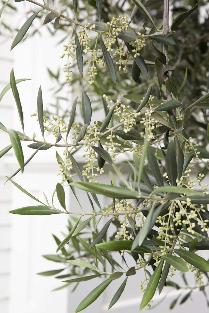 10 Garden Ideas To Steal From Greece Gardenista