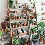 Object Of Desire Wooden Ladder Bookshelf For Plants