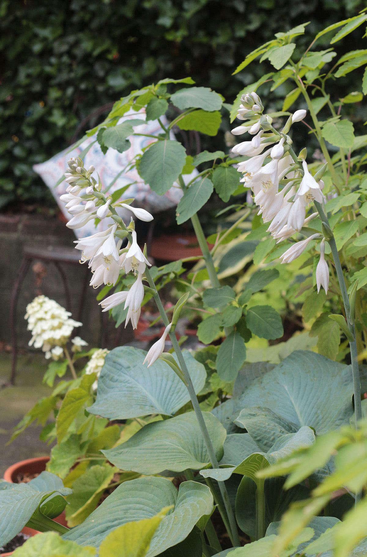 Container Gardening 12 Shade Loving Plants In My Backyard Gardenista