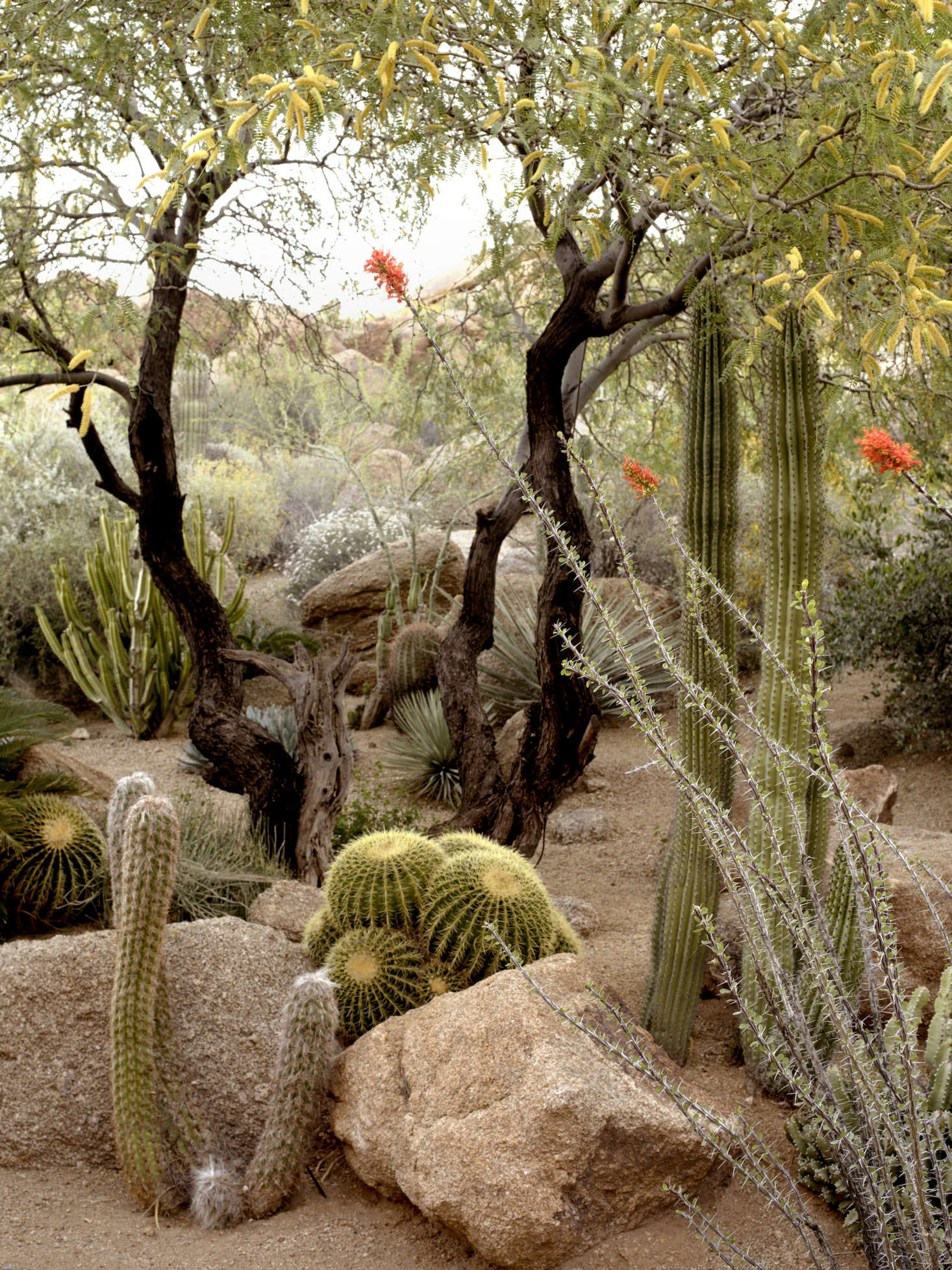 10 Ideas To Steal From Desert Gardens
