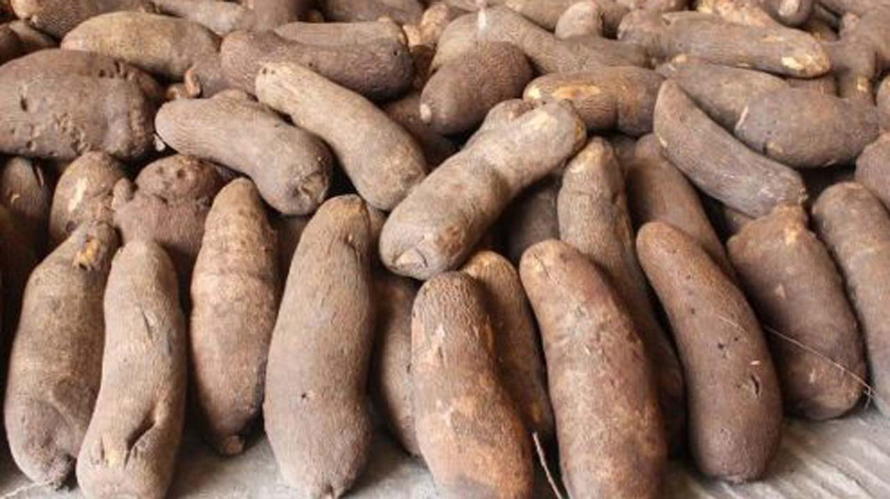 Image result for yam in nigeria