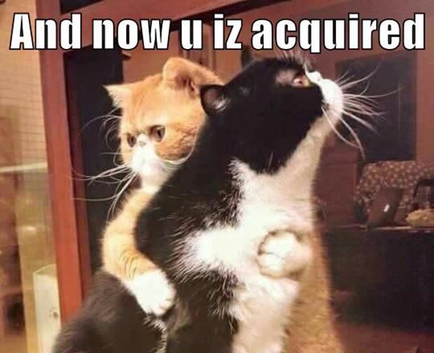 Cats Cheezburger