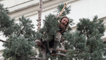 How #ManInTree climbed to the top of Twitter